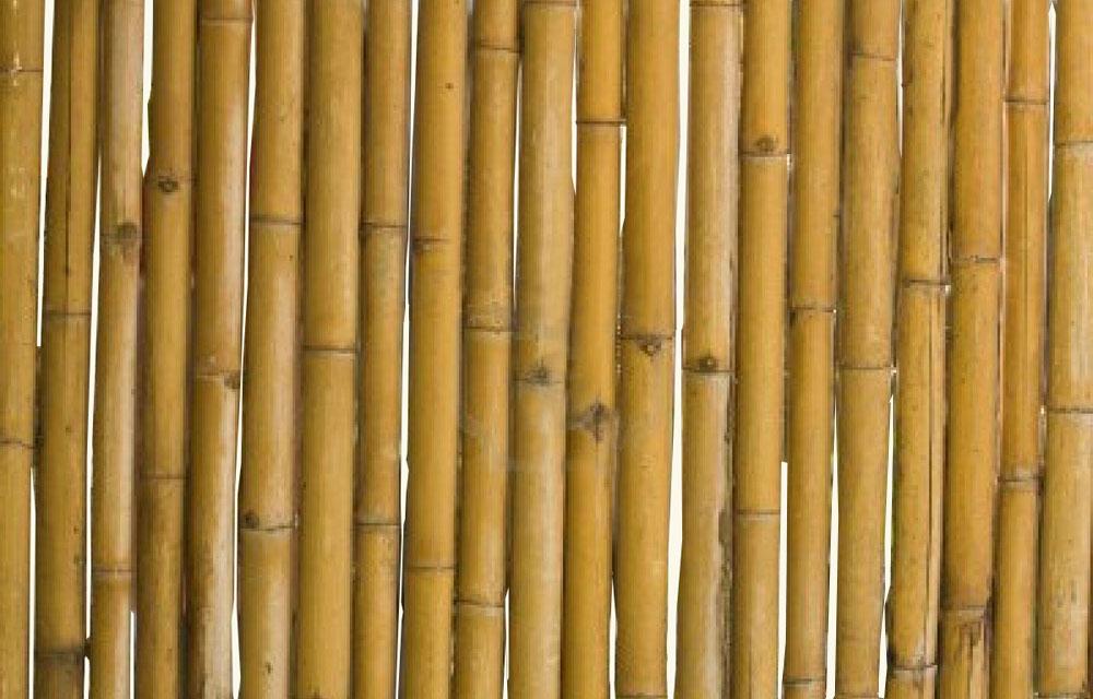 Bamboe Rene Van Maarsseveen