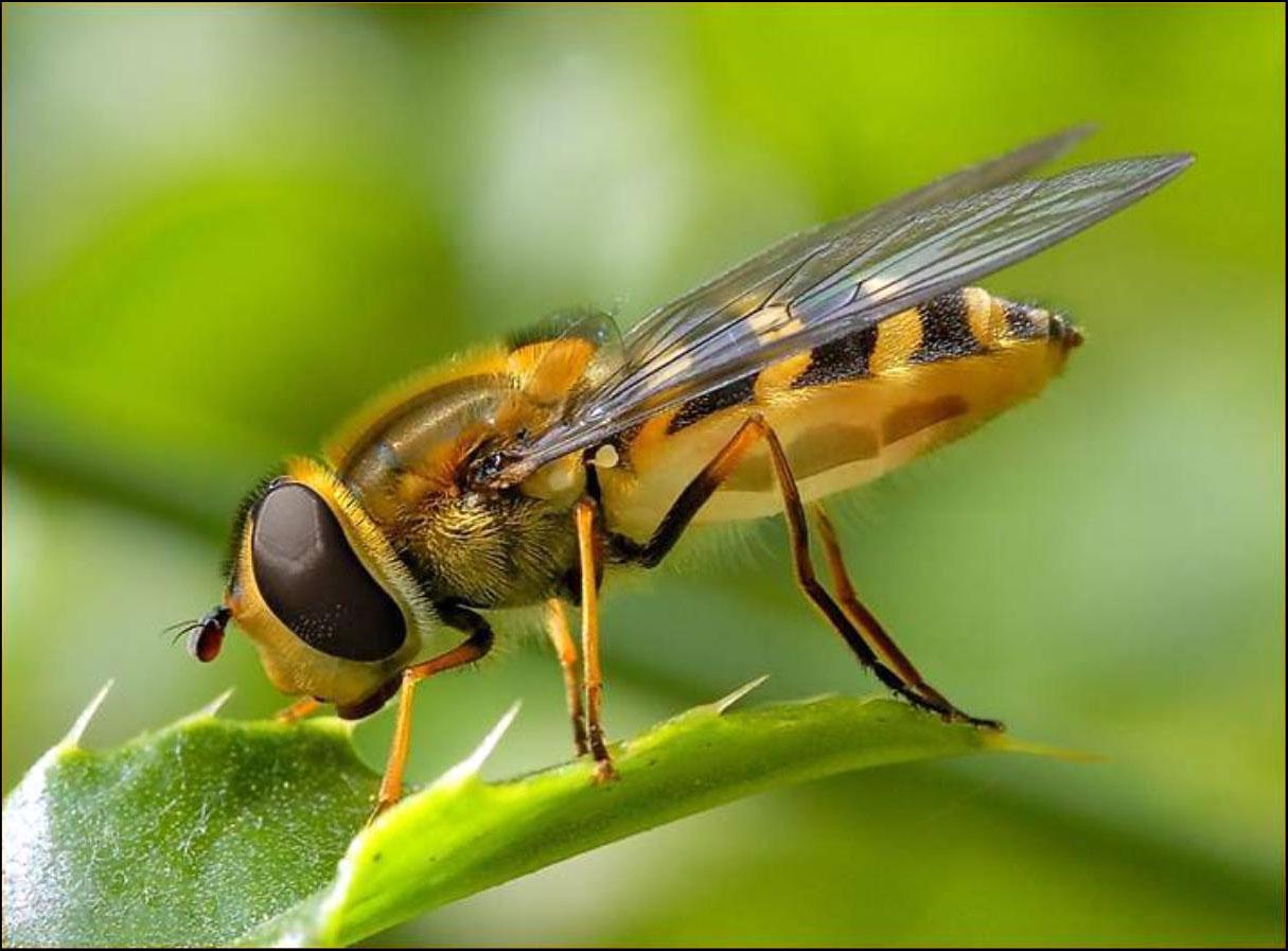Citaten Over Bijen : Red de bijen rene van maarsseveen