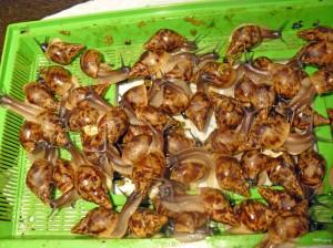 Een mandje Afrikaanse slakken.