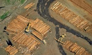 houtfabriek
