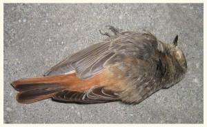 een dode vogel